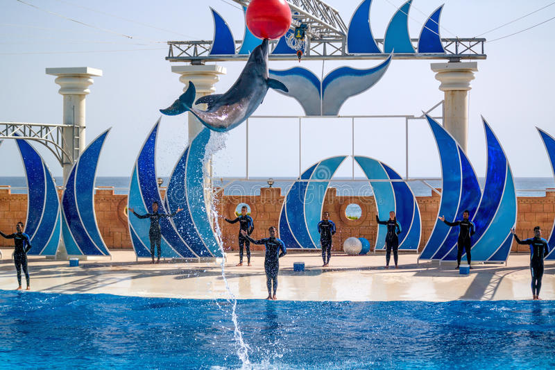 Alanya, Turkey - May 3, 2014: Dolphin Sealanya - shows featuring dolphins and sea lions. Dolphin jumping out of the water and pulls out at high altitude red stock image