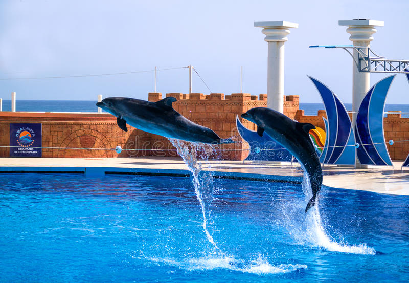 Alanya, Turkey - May 3, 2014: Dolphin Sealanya - shows featuring dolphins and sea lions. A pair of dolphins jumping rope stock image