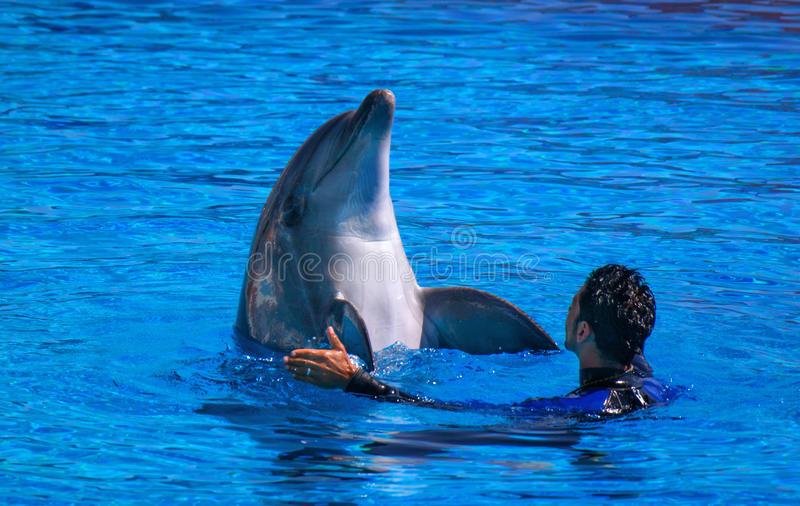 Alanya, Turkey - May 3, 2014: Dolphin Sealanya - shows featuring dolphins and sea lions. Speech trainer and dolphin stock photo