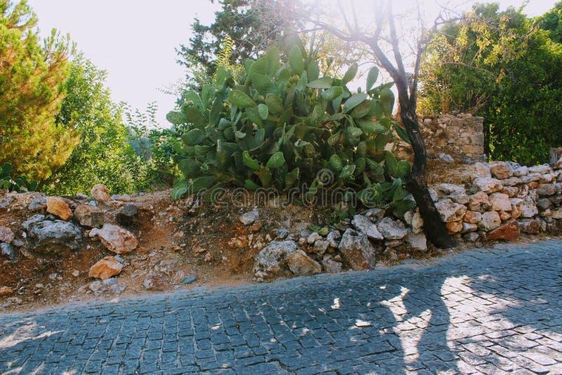 Alanya Turkiet, Juli 2017: kaktussidor med autografer av turister på vägen som leder till berget till Alanya, rockerar royaltyfri bild