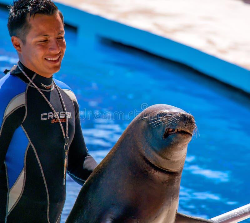 Alanya, Turquia - 3 de maio de 2014: Golfinho Sealanya - mostras que caracterizam golfinhos e leões de mar foto de stock royalty free