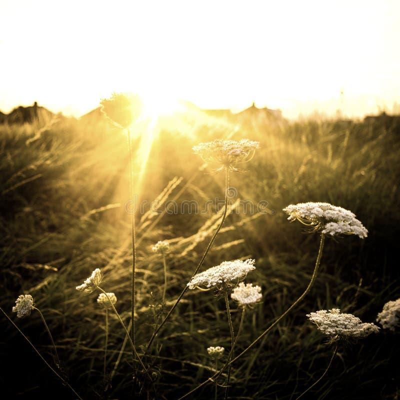 Alargamento do sol do inverno imagens de stock