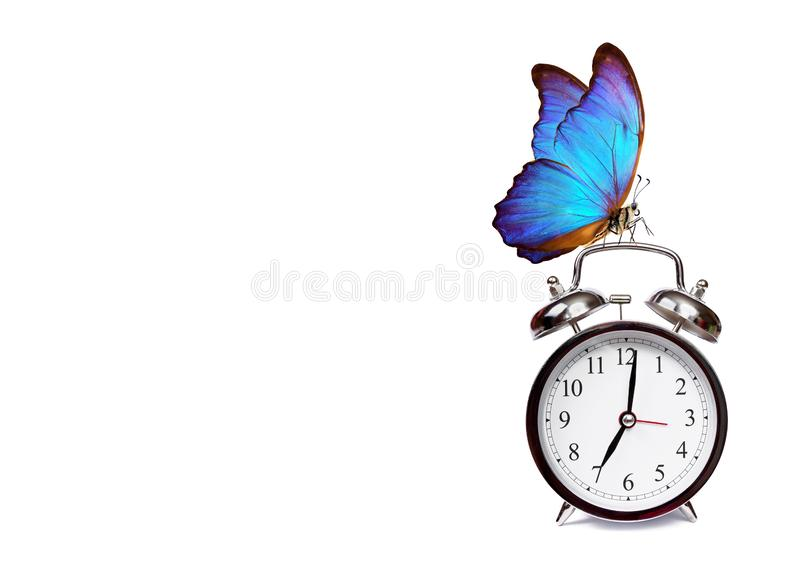 Alarm clock and beautiful butterfly morpho isolated on white background royalty free stock photo