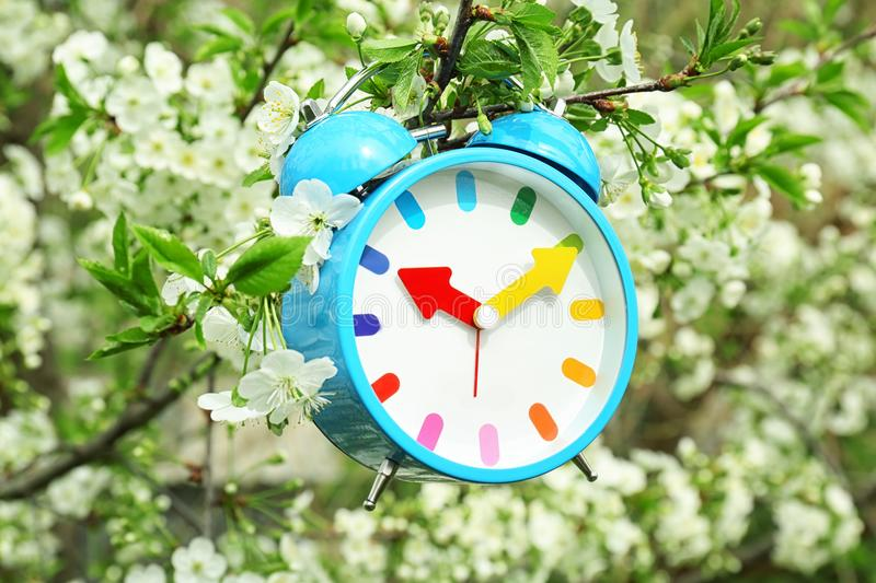 Alarm clock hanging on blossoming tree branch royalty free stock images