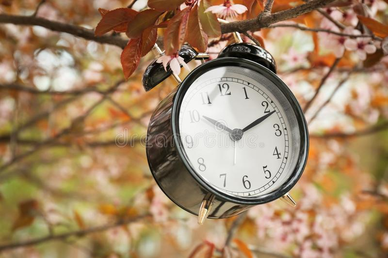 Alarm clock hanging on blossoming tree branch, stock photo