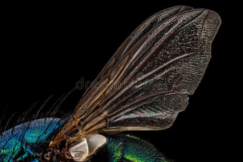Alas de la mosca fotografía de archivo libre de regalías