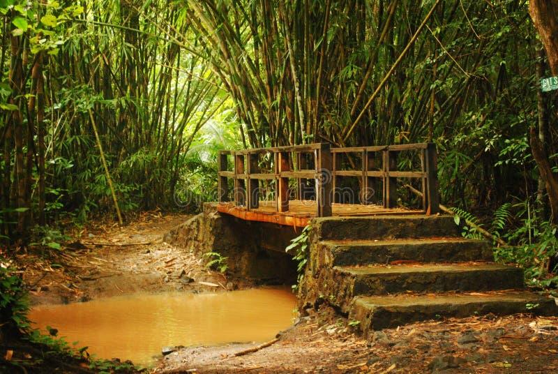 Alas purwo's bridge royalty free stock photos