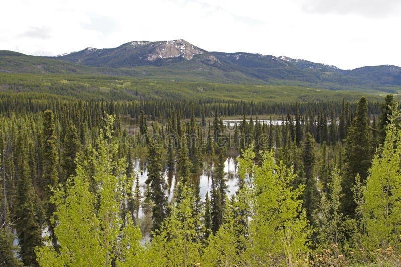 Alaska autostrady pokoju rzeka obraz royalty free