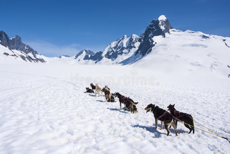 Alaska - aventura Sledding do cão imagens de stock