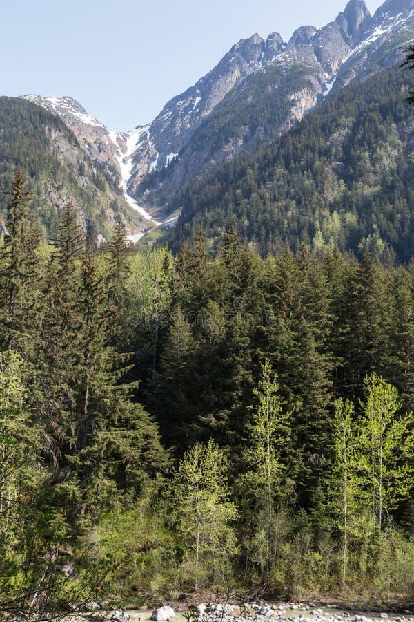 Alaska berg och skogar royaltyfria foton