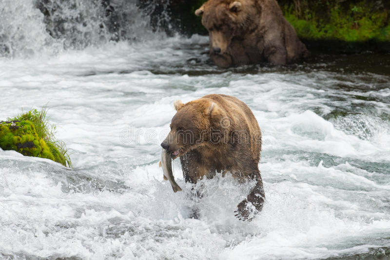 Alaska-Braunbären an den Bach-Fällen lizenzfreie stockfotos