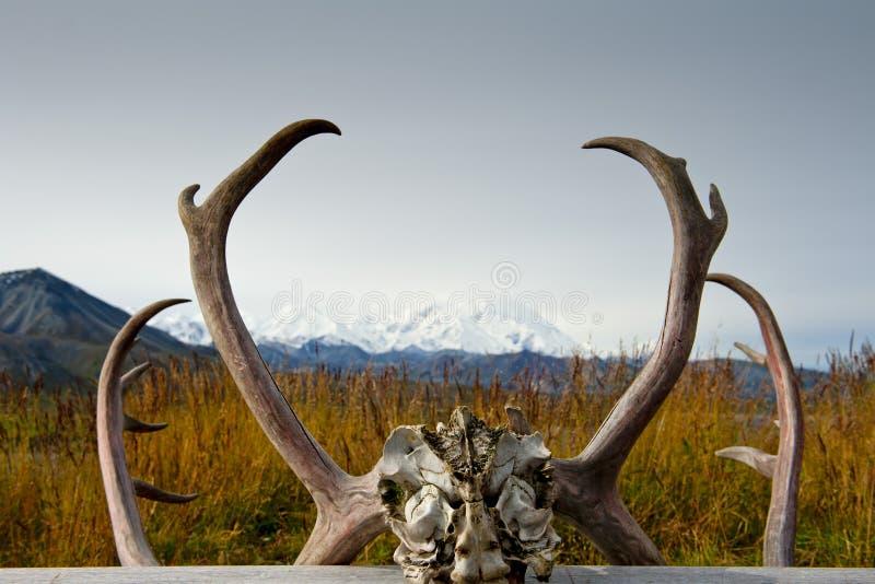 Alaska Denali parkerar den Mc Kinley ramen royaltyfria bilder