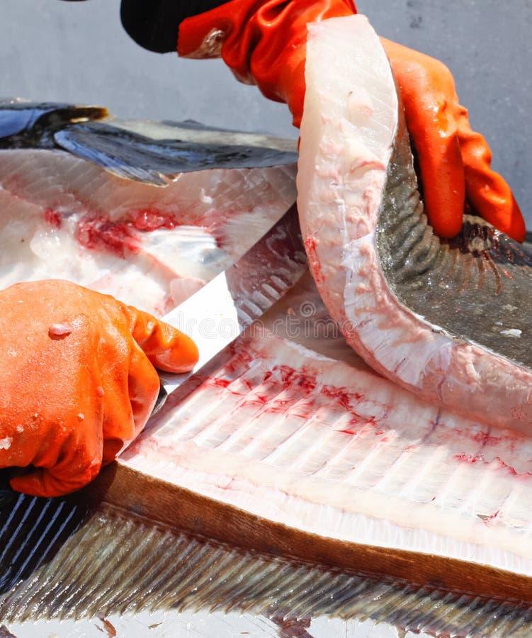 Download Alaska Fresh Halibut Fish Filet Stock Photos - Image: 29020163