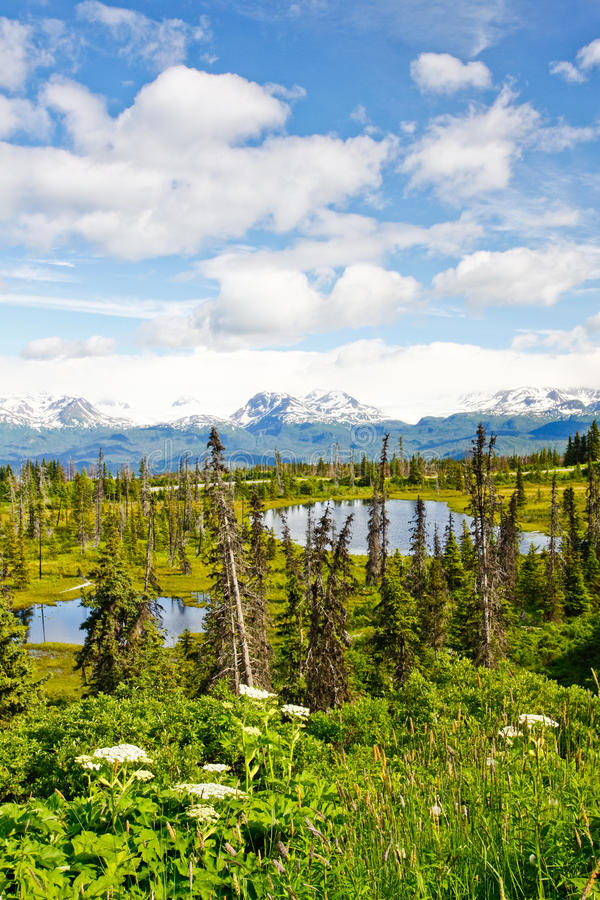 Alaska - Kenai Peninsula Lakes and Mountians. A beautiful portrait view a souple of small alpine lakes with snow covered moutians and glaicers across Kachemak royalty free stock photography