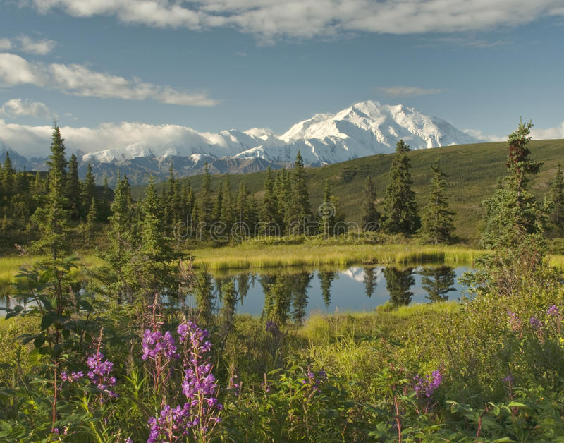 Alaska krajobraz z jasnym Denaili obraz royalty free