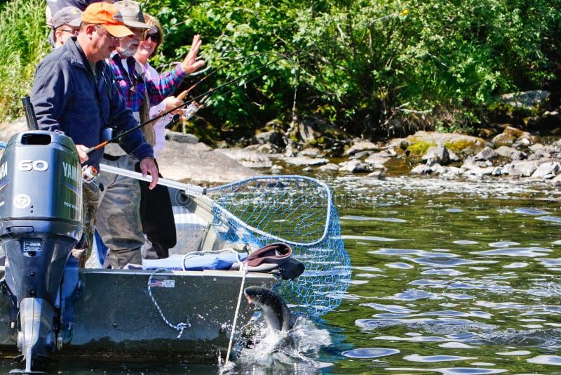 Alaska - Lachs, der am Netz 2 springt stockfoto