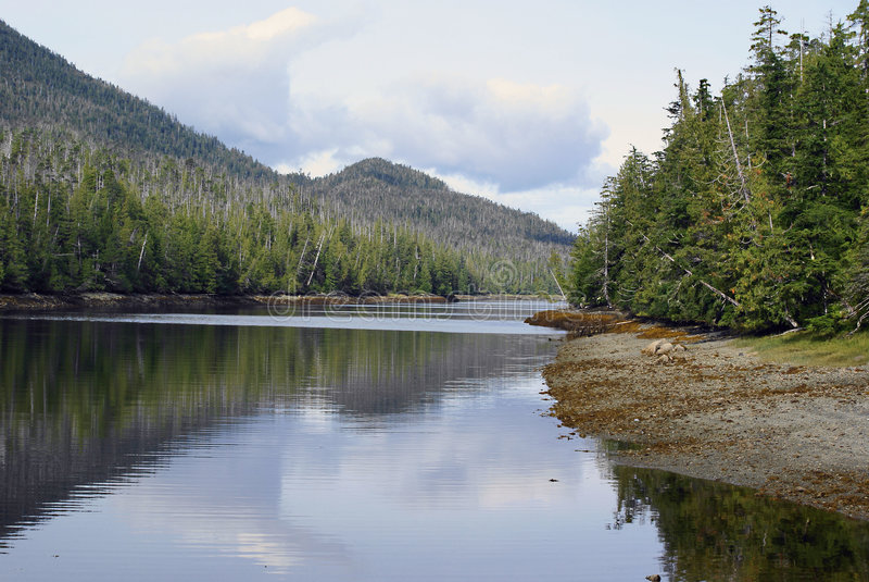 Download Alaska lakes stock image. Image of water, pines, wildlife - 1804445