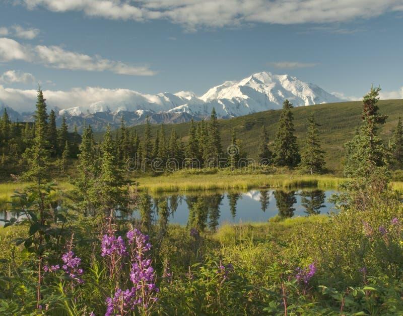 Alaska landscape with a clear Denaili royalty free stock image