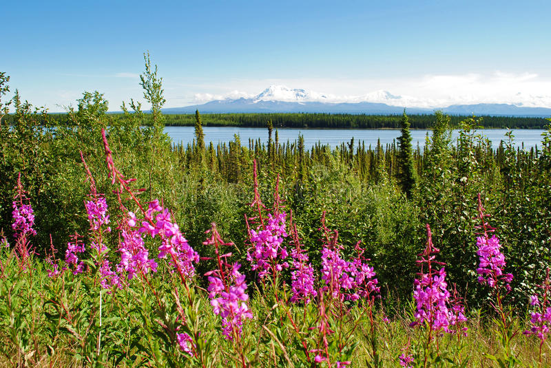 Alaska-Landschaft stockfotos