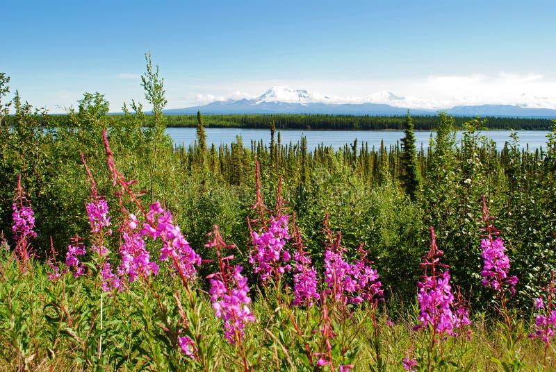 alaska landskap arkivfoton
