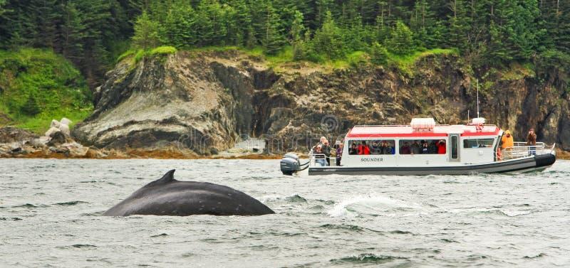 Alaska - małej łódki Humpback wieloryba dopatrywanie zdjęcie stock