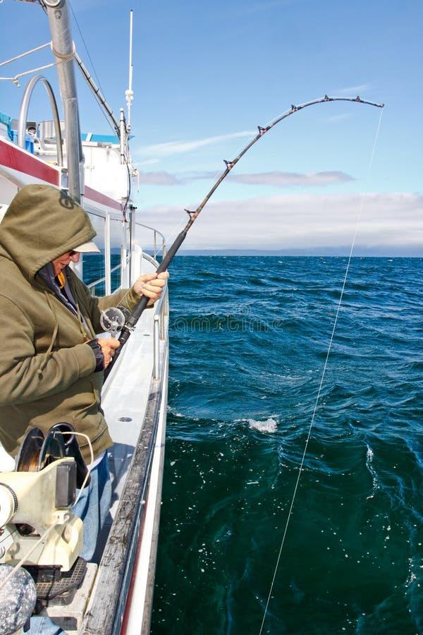 Alaska - manfiske som Reeling i hälleflundra arkivfoto