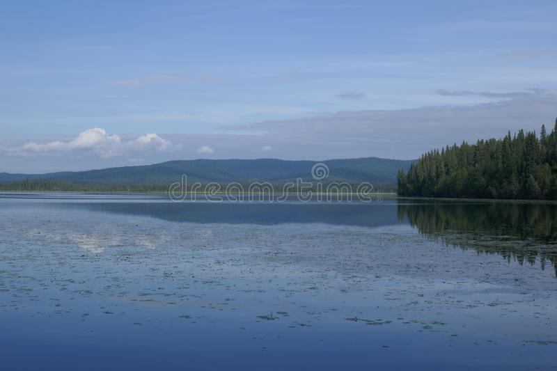 Alaska`s Birch Lake royalty free stock image