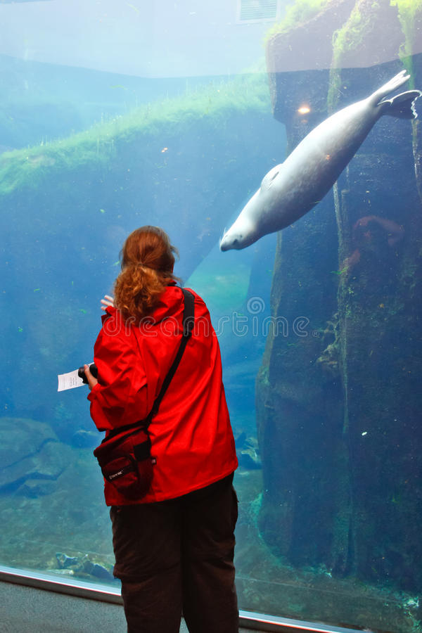 Alaska - Sea Life Center Friends. A woman makes a connection with one of the playful Harbor Seals at the Alaska Sea Life Center. Many visitors to Seward, Alaska stock images