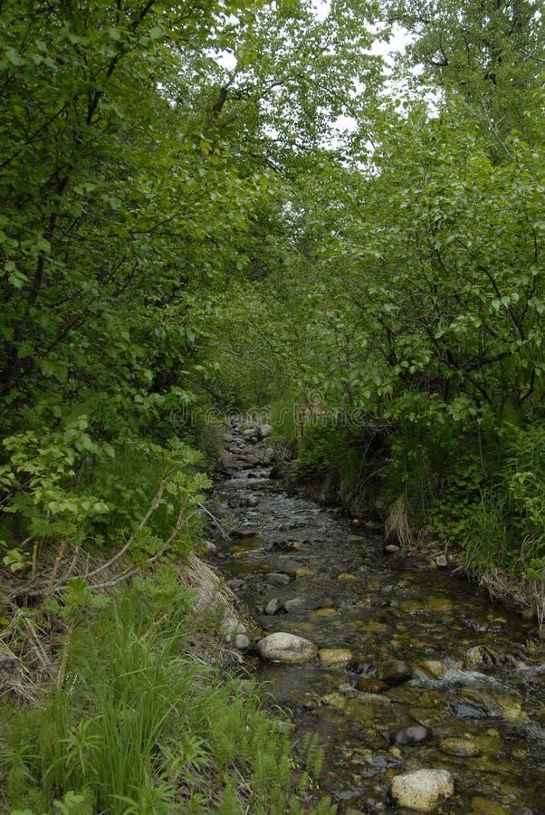 Alaska strumień w lecie zdjęcia royalty free