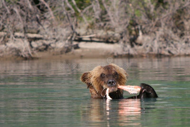 Alaska-Sushi-Stab lizenzfreie stockfotos