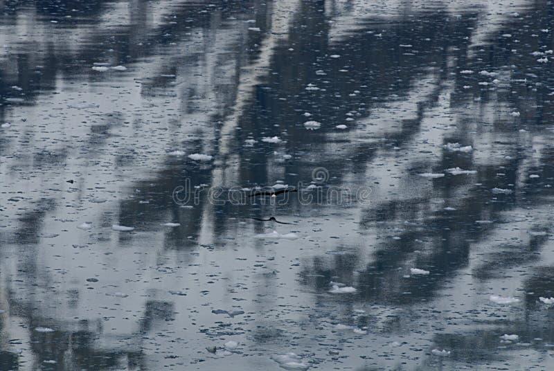 ALASKA/USA _GLACIER BAY_MOUNTIANS I USA royaltyfria foton