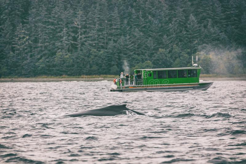 Alaska whale watching tour activity as cruise ship excursion popular tourist attraction in Juneau, USA. Summer Autumn travel stock photography