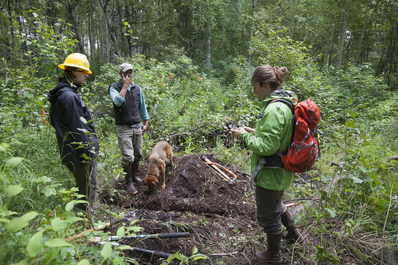Download Alaska Wilderness Trail Construction Editorial Image - Image of game, fish: 57011035
