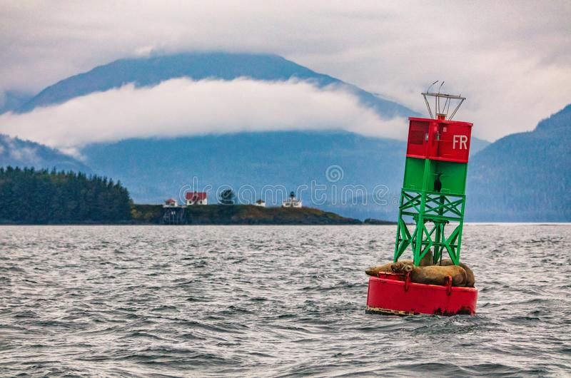 Alaska wildlife sightseeing whale watching boat tour in Juneau. Stellar sea lions Nature landscape cruise travel. seals on buoy in stock images