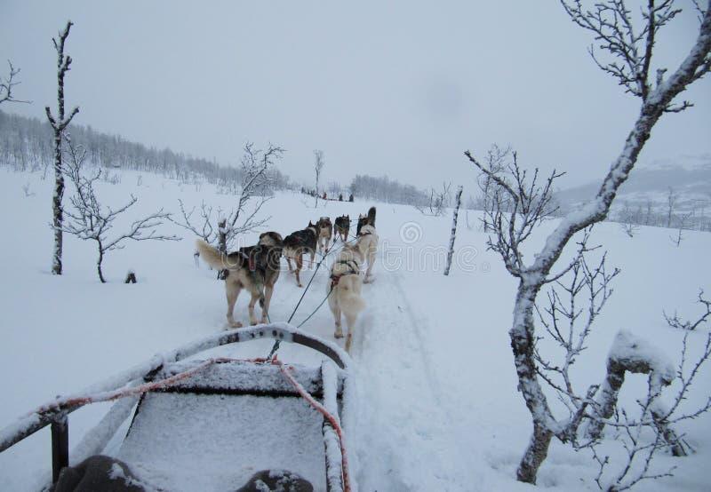 AlaskaboHusky Sled hundkapplöpning royaltyfri foto