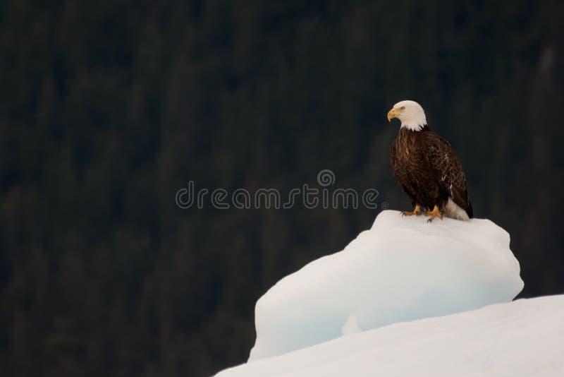 Alaskan cruise royalty free stock photos