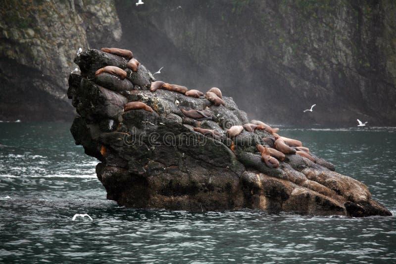 Alaskan da paisagem com os leões de mar de Steller fotos de stock royalty free