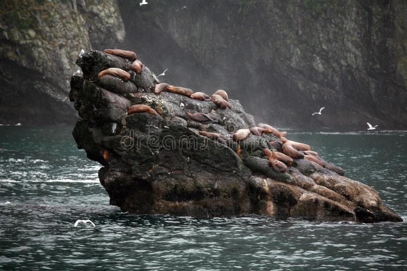 Alaskan del paesaggio con i leoni marini di Steller fotografie stock libere da diritti