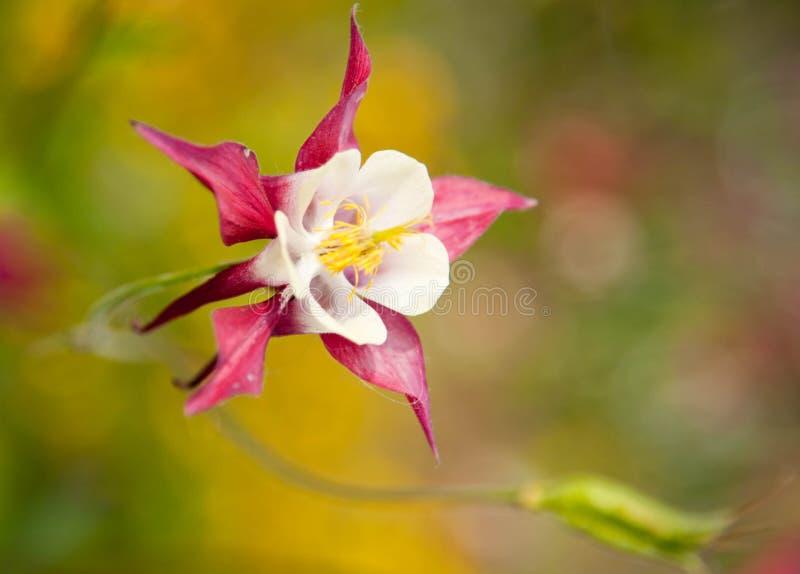 Alaskan Flower. Wild flower in remote south east Alaska stock images