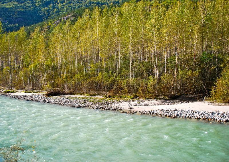 Alaskan Landscape with a Pattern of Trees Along the Creek royalty free stock photos
