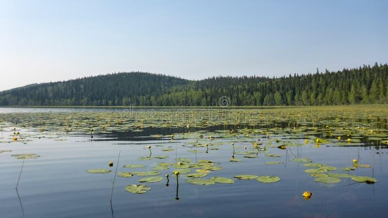 Alaskas der verlorene See lizenzfreie stockbilder