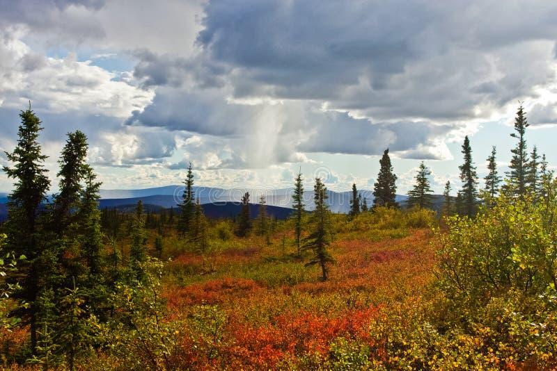 Alaskas Wildnis im Fall lizenzfreie stockfotos
