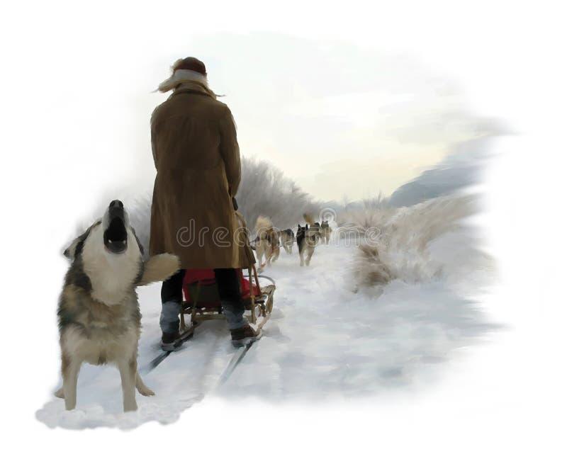 alaski malamute zdjęcie stock