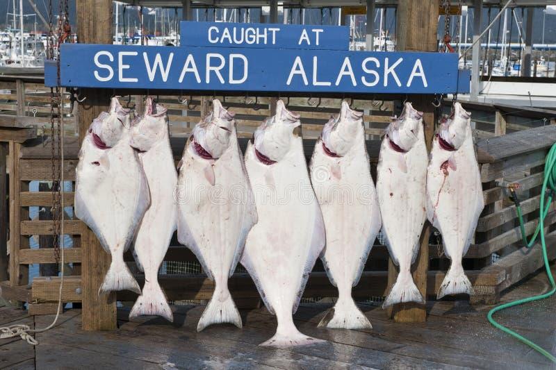 Alaskische Fische stockfotos