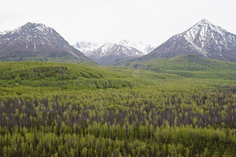 Alaskische Landschaft lizenzfreies stockbild