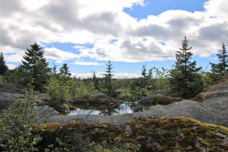 Alaskische Landschaft mit Baumreflexion im Wasser lizenzfreies stockfoto
