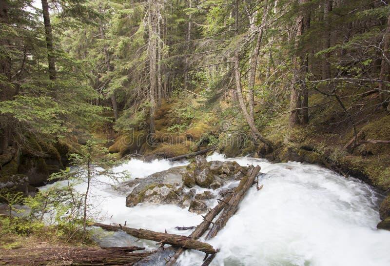 Alaskischer Reid Creek stockfotografie