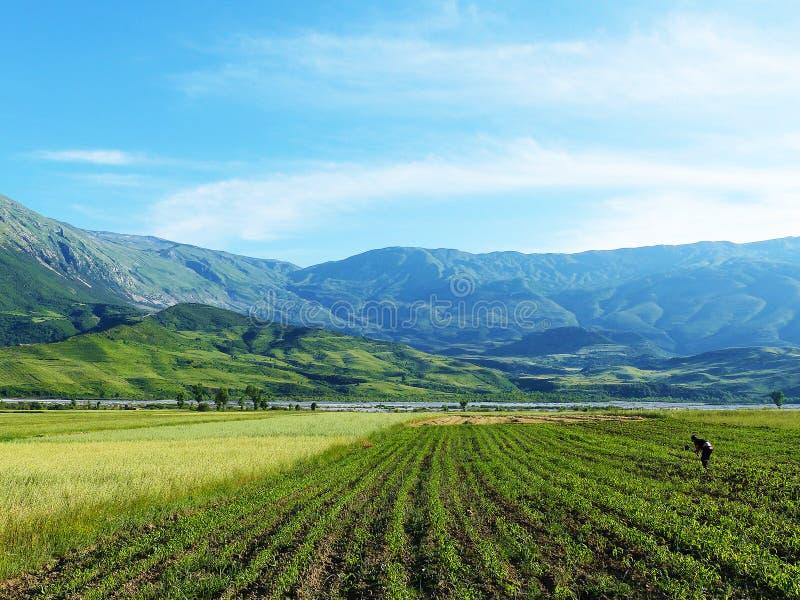 Albańczyka pole z rolnikiem zdjęcie royalty free