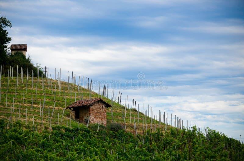 Alba, виноградники Roero стоковое фото