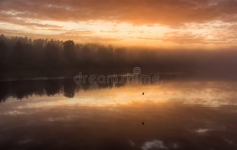 Alba ad acqua Riflessione degli alberi in stagno sulla mattina nebbiosa fotografie stock